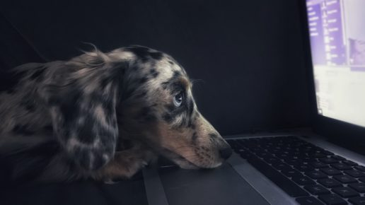 sleepy dog at the computer